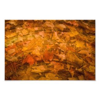 Fallen Leaves Photo Print