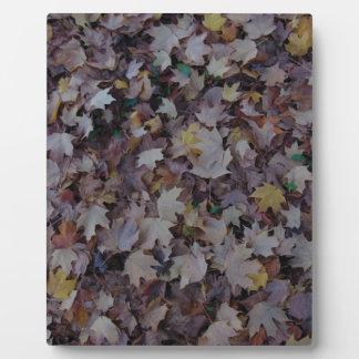 Fallen Maple Leaves Plaque