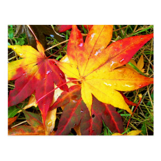 Fallen Maple Leaves Postcard