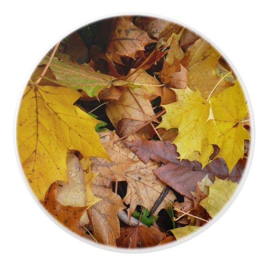 Fallen Maple Leaves Yellow Autumn Nature Ceramic Knob