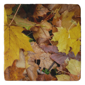 Fallen Maple Leaves Yellow Autumn Nature Trivet