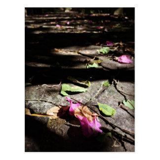 Fallen off Bougainvillea Postcard