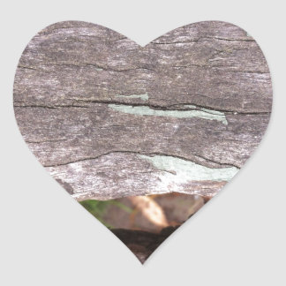 Fallen sun bleached tree with hollow point heart sticker