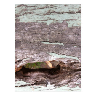 Fallen sun bleached tree with hollow point postcard