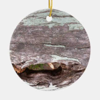 Fallen sun bleached tree with hollow point round ceramic decoration
