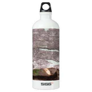 Fallen sun bleached tree with hollow point SIGG traveller 1.0L water bottle