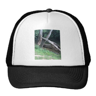 Fallen Tree Cap