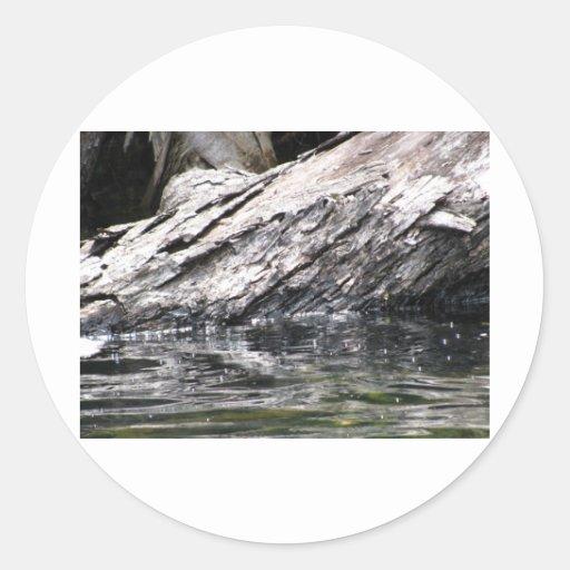 Fallen Tree in Lake Stickers