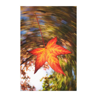 Falling Leaf from a tree in autumn Stretched Canvas Prints