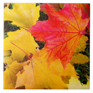 Falling maple leaves on a ground ceramic tile