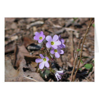 False Rue Anemone Card