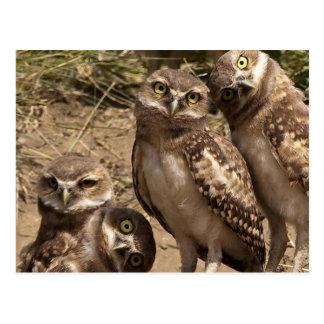 fam owl postcard
