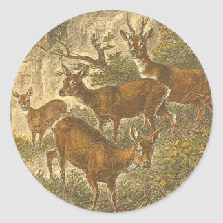 Family of Roe - Deers in a Forest Classic Round Sticker