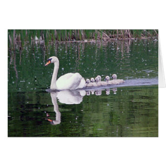 Family Of Swans Card
