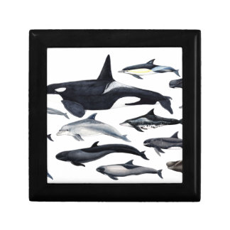 Family of the dolphins: orcas, dolphins, marsopas gift box