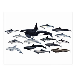 Family of the dolphins: orcas, dolphins, marsopas postcard