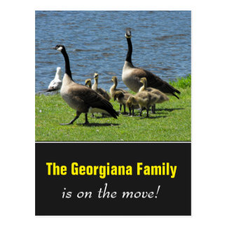 Family on the Move + Canada Geese on the Grass Postcard