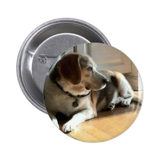 Famous Dogs: Dexter the Beagle 6 Cm Round Badge