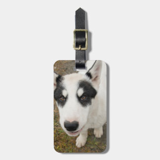 Famous Greenlandic sled dog, black and white puppy Bag Tag
