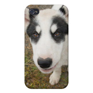 Famous Greenlandic sled dog, black and white puppy iPhone 4/4S Cases