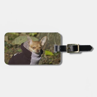 Fancy Chihuahua Luggage Tag