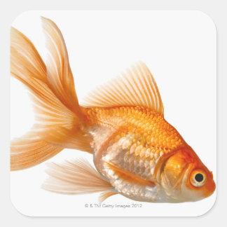 Fancy Goldfish Square Sticker