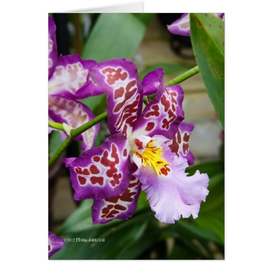 Fancy Lady Orchid Card