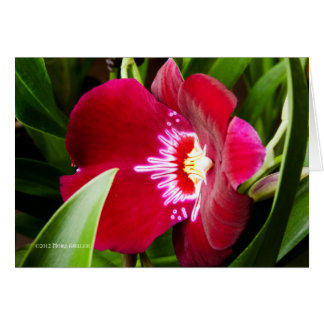 Fancy Orchid Red Card