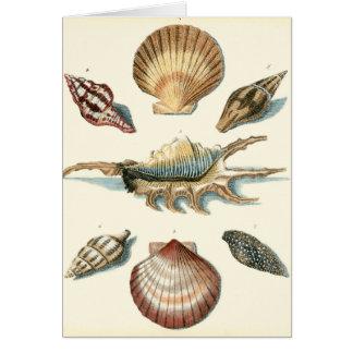 Fancy Shell Beach Card