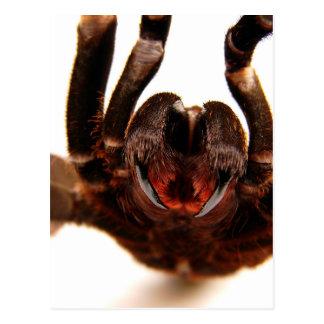 Fangs - Tarantula Art Image 2 Postcard