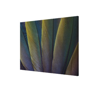 Fanned Buffon'S Macaw Feathers Canvas Print