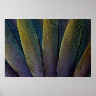 Fanned Buffon'S Macaw Feathers Poster