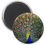 Fanning Peacock - Round