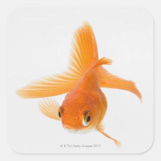Fantail goldfish (Carassius auratus) Square Sticker