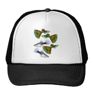 Fantail Guppies Cap