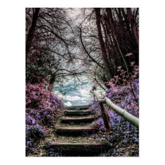 Fantasy Forest Steps Postcard