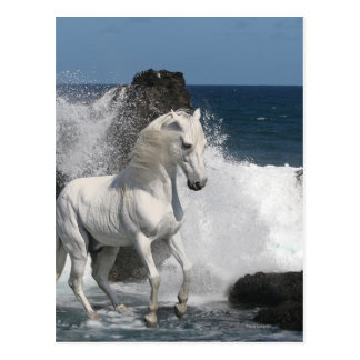 Fantasy Horses: Southern Seas Postcard