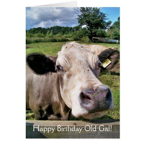 FARM ANIMALS, CUTE COW GREETING CARDS
