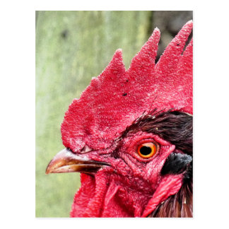 FARM ANIMALS, ROOSTER POSTCARD