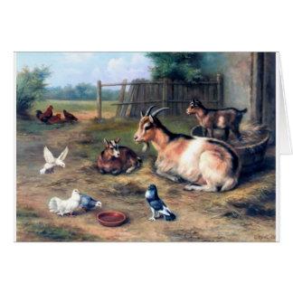 Farm Goat Kids Pigeons Greeting Card