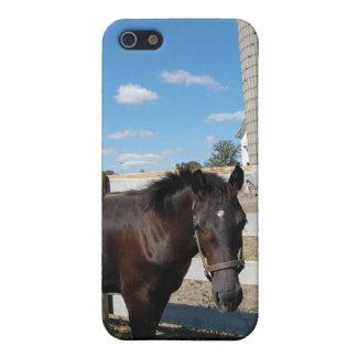 Farm Horse iPhone 5 Case