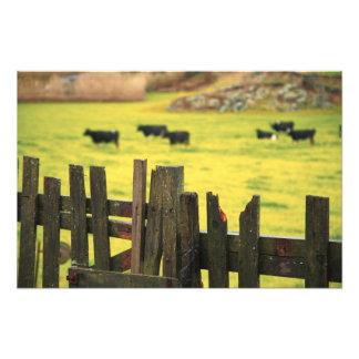 Farm scene art photo