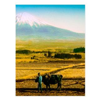 Farmers Oxen Plowing Field in Shadow of Mt. Fuji Postcard