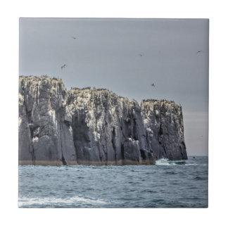 Farne Islands cliffs small square tile