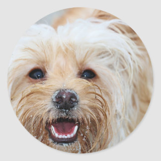 Farris - Lucy - Mixed Breed Classic Round Sticker