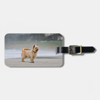 Farris - Lucy - Mixed Breed Luggage Tag