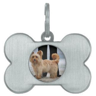 Farris - Lucy - Mixed Breed Pet ID Tag