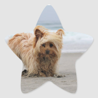 Farris - Lucy - Mixed Breed Star Sticker