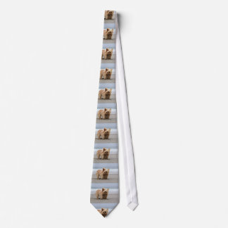 Farris - Lucy - Mixed Breed Tie