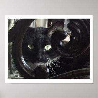 Fascinating Feline Print